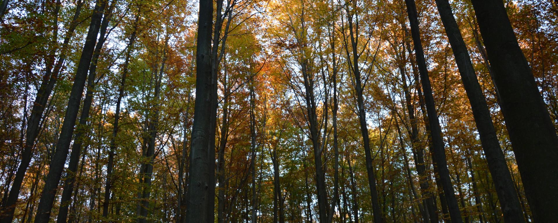 Couleurs d'automne au bois de Hal