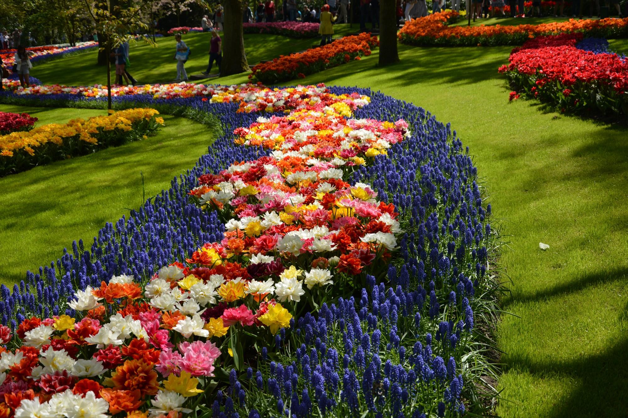 Keukenhof : le paradis des fleurs et des couleurs