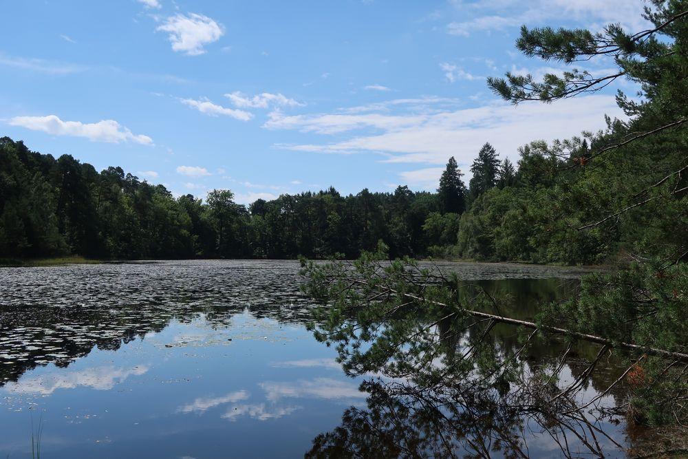 étang de Lieschbach