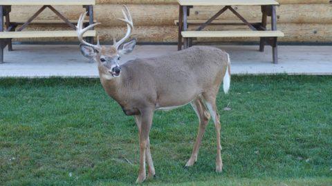 Le Parc Oméga à la découverte des animaux du Canada